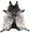 Wholesale Exotic Longhorns